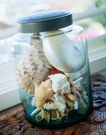 shells-in-glass-jar